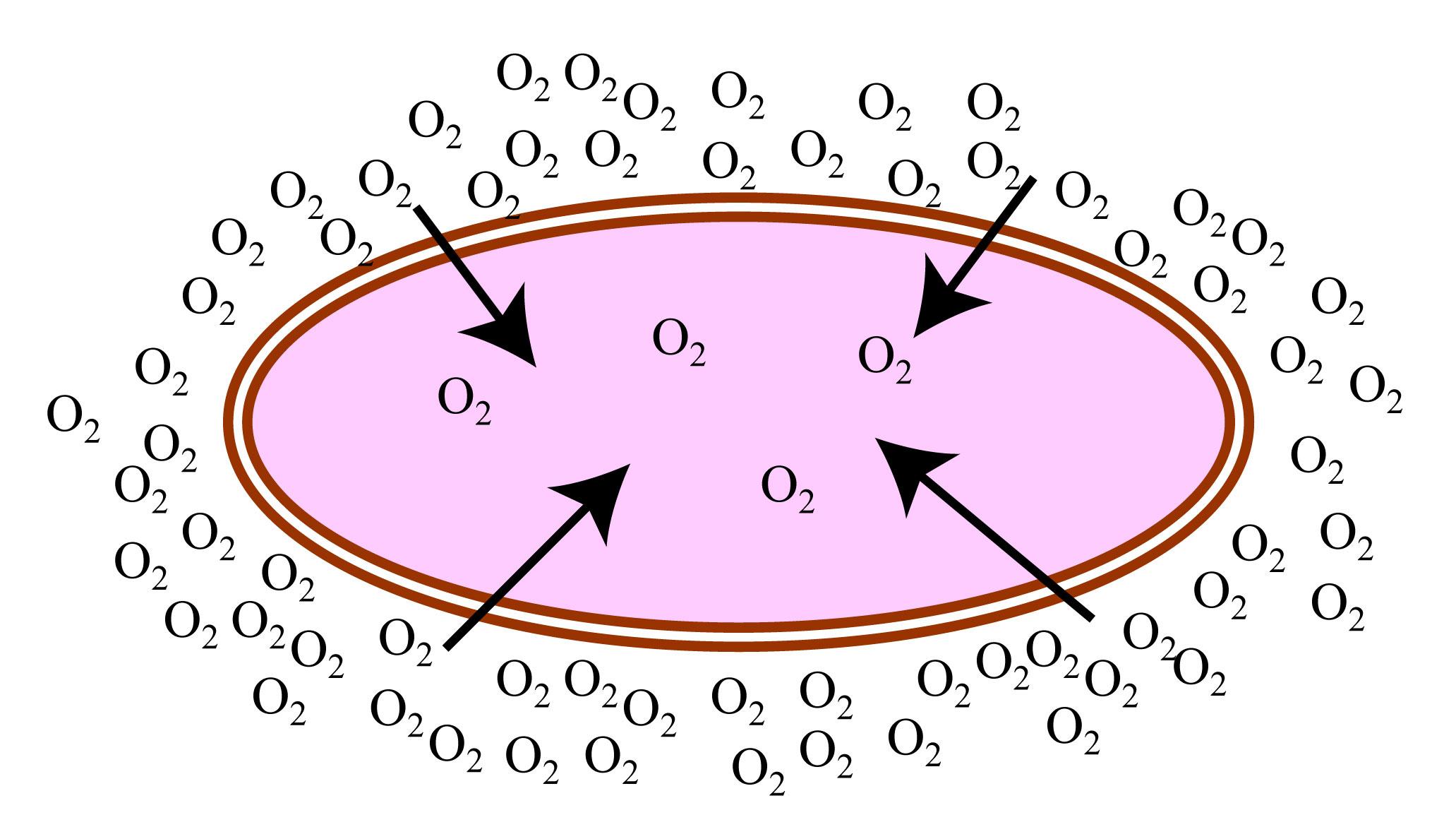 O2Diffusion.jpg