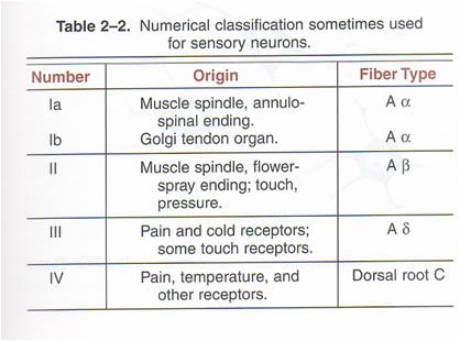 classification of sensory receptors