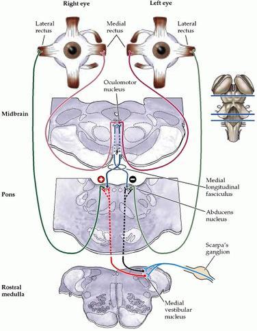 Balance And Eye Movements