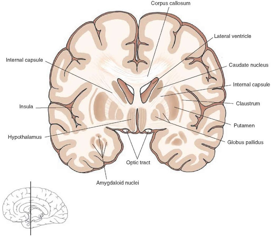 White Matter Tracts in the CNS